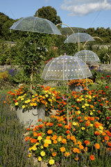 Umbrellas and Tagetes - Alsace France Wesserling Park