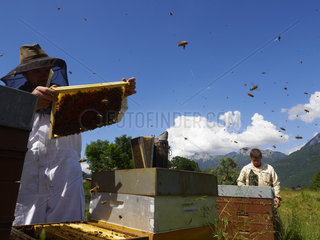 Beekeeping - Inspection of the hives during the production of honey in Annecy. France