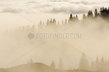 Mist on the Haut Jura Crests  towards the Col de la Faucille  Jura  France