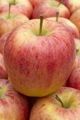 Apple 'Mitch Gala'