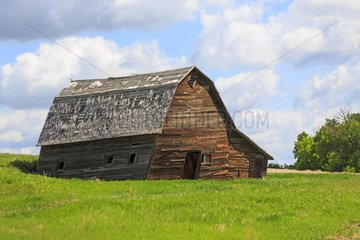 Old barn wood leaning on the side - Alberta Canada