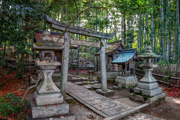 Sanctuary entrance cross a bamboo's path  Kyoto  Japan