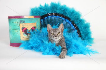 Kitten sitting on a blue colored feather wreath on white background