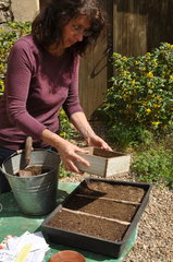 Sowing wild companion plants in a tray