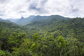 Obo National Park Primary Forest  Sao Tome and Principe Island