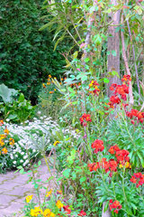 Wallflower (Erysimum cheiri  cheiranthus cheiri)  Dordogne  France