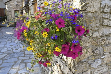 Bouquet of flowers at the corner of a street in Nimes le Vieux  Causse Mejean  Cevennes National park  France