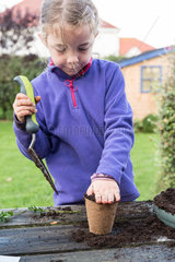 Little girl making a cutting from a box tree