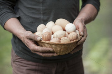 Picking of eggs in a garden