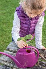 Little girl making a cutting from an hydrangea