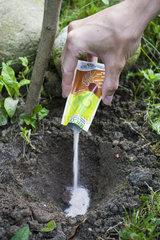 Mycorrhiza treatment on a shrub in a garden