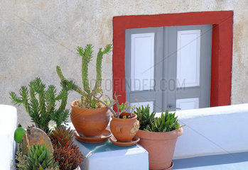 Thorny and spicy potted plants in decoration  Santorini Island  Cyclades  Greece