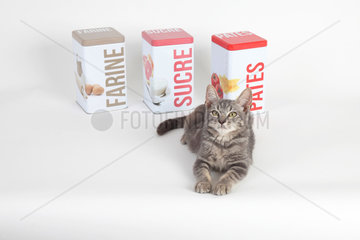 Kitten lying in front of food boxes on white background