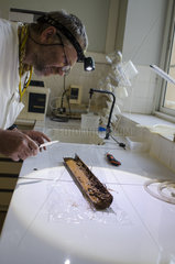 Christophe Durlet (lecturer at the University of Burgundy) samples a core in the laboratory. Laboratory of the Multidisciplinary Pole of Matter and Environment in Noumea. Study of the impact of the exploitation of Nickel. North Province  New Caledonia