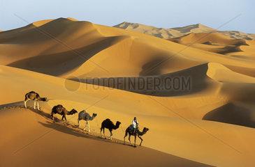 Berber with dromedaries - Erg Chebbi Sahara desert Morocco