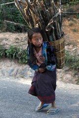 Hmong girl carrying firewood - Laos