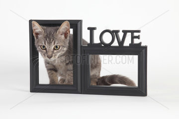 3 months old kitten appearing through a frame on white background