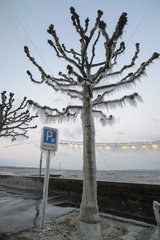 Ice sculptures on the shores of Lake Geneva during the cold wind episode of 17 January 2017  Versoix  Switzerland