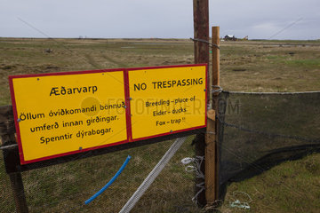 Nesting area of Common Eiders (Somateria mollissima) used for down harvesting and protected by an electric fence and prohibited from entering. Iceland