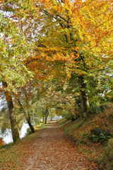 Forest path in autumn along the lake of Huelgoat  Armorique Regional Nature Park  Brittany  France