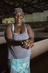 Woman presenting Cocoa beans  Private processing plant for cocoa beans from Agua Ize  Sao Tome and Principe Island