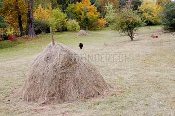 Old-style haystack in the park of Madame Elisabeth domain in Versailles  France