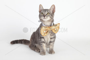 Kitten sitting with bow tie on white background
