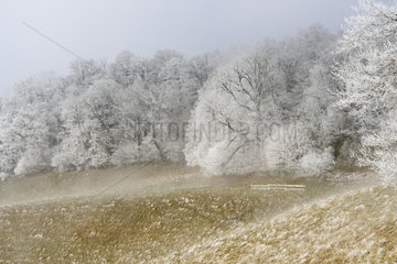 Frosted trees in Haute-Savoie  Alps  France