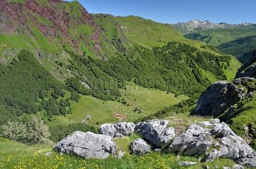 Cleared slopes of the Espelunguere  caused by pastoralism  Aspe valley  Pyrenees  France