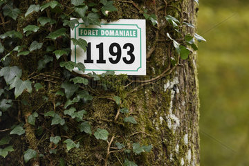Panel on a tree in the forest of Chaux towards Dole  Jura  France