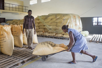 Preparation of bags for export  Bagging and drying center  CECAB  Organic Cocoa Production and Export Cooperative  Fair Trade  Guadalupel  Sao Tome and Principe Island