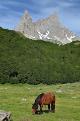 Mare at the mountain pasture: Aiguilles d'Ansabere  Aspe valley  Pyrenees  France