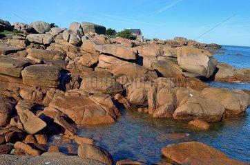 Ile Renote  Pink Granite Coast  Brittany  France