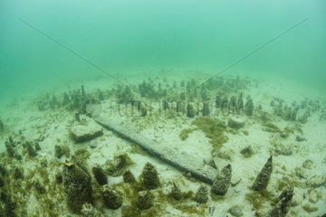 Remains of a Roman place of worship in Lake Bourget  Savoie  France