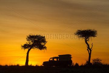 Vehicle vision at sunrise in savannah - Masai Mara Kenya