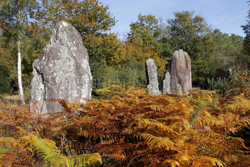 Alignment of straight stones in the Landes de Monteneuf Regional Nature Reserve  Brittany  France