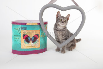 Kitten behind a heart next to a box on white background