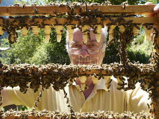 Beekeeping - Queens breeder in Switzerland In Switzerland  a beekeeper inspects his queen bee farm. The queens are raised by the beekeepers to repopulate their hives and increase their stock.