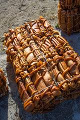 Edible seaweed - Cucao Chiloe Island Chile