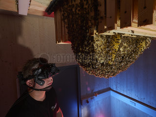 Apidologie - Hartmut Vierle  Hobos project director  observing a bee colony with a Thales nocturne infrared camera. Hobos - University of Wuerzburg  Germany.