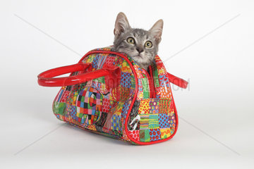 3 months old kitten in a colored bag on white background