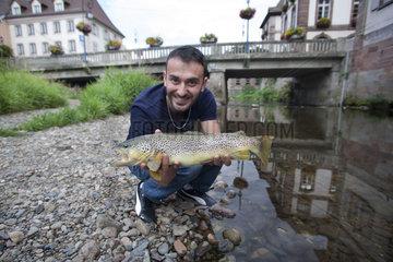 Fisherman with Brown Trout (Salmo trutta fario)  Doller River  Doller Valley  Haut-Rhin  Alsace  France