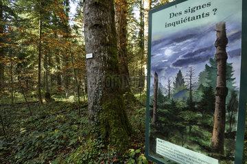 La Glaciere biological reserve in the forest of La Joux  Jura  France