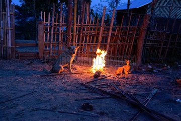 In the Taungoo area  elephants are used from November to March for skidding trunks of precious trees. At Mying Whai Wynn  mahouts of the Bamas ethnic group go for the Iron Wood and the teak in the jungle near their village.