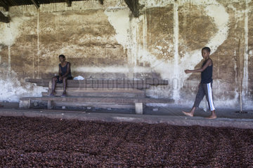 Boy in a cocoa beans dryer  Bela Vista Village  Sao Tome and Principe Island