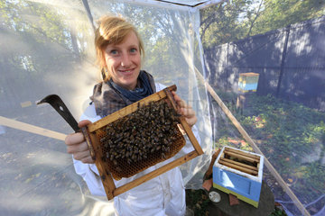 Apidologie - The apiculturist Lucie Hotier in a screened and enclosed apiary holds a frame with marked bees. CNRS. Universite Paul Sabatier. Toulouse  France.