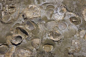 Fossil Shells - Peninsula Valdes Argentina