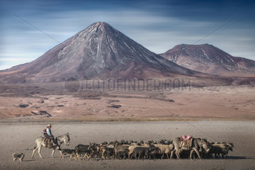Shepherd and sheeps in front of volcano Licancabur  Atacama Desert  Chile