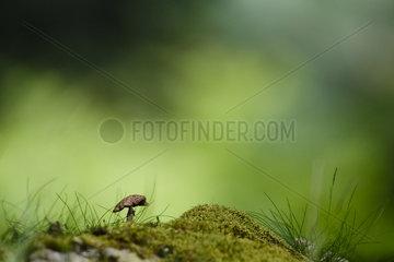 Dryed Mushroom in backlight  Alsace  France