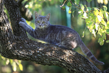 Kitten making her claws on a tree